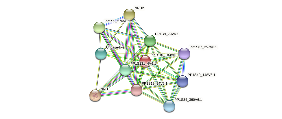 PP1S10_183V6.1 protein (Physcomitrella patens) - STRING interaction network