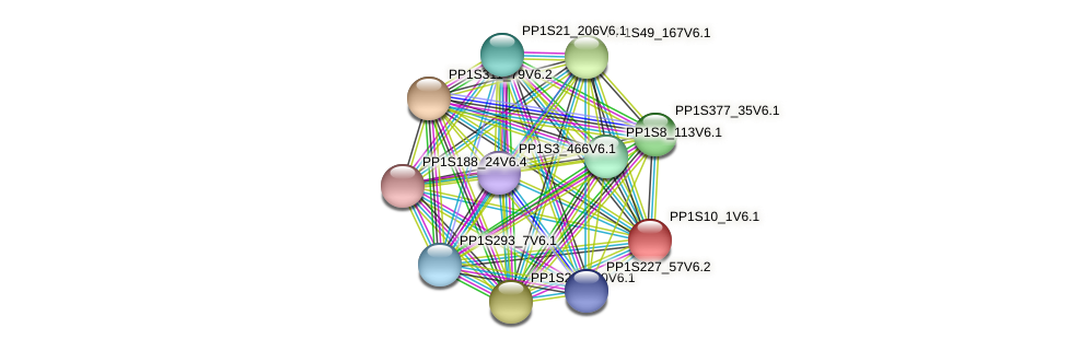 PP1S10_1V6.1 protein (Physcomitrella patens) - STRING interaction network