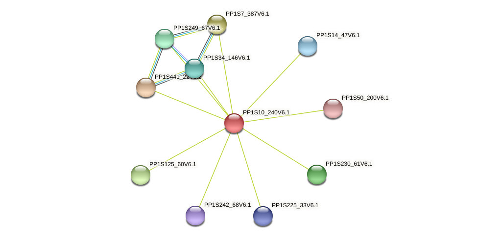 PP1S10_240V6.1 protein (Physcomitrella patens) - STRING interaction network