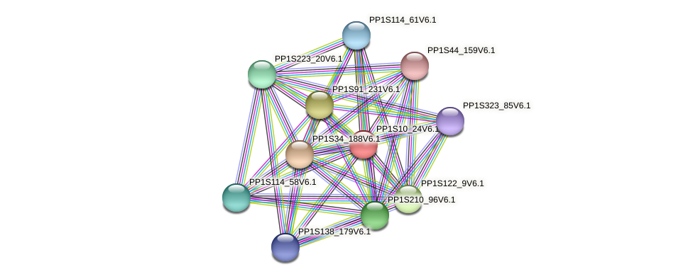 PP1S10_24V6.1 protein (Physcomitrella patens) - STRING interaction network