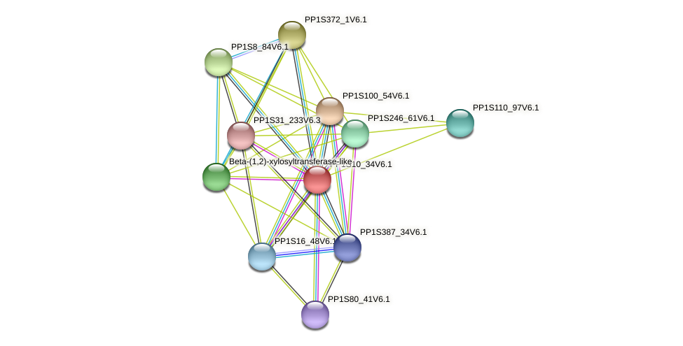 PP1S10_34V6.1 protein (Physcomitrella patens) - STRING interaction network