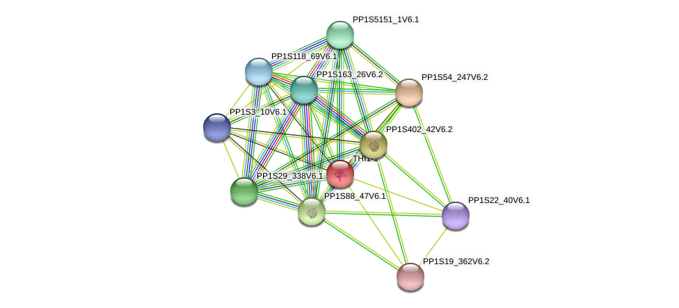 THI1-1 protein (Physcomitrella patens) - STRING interaction network
