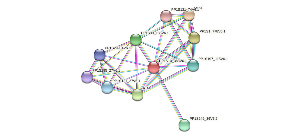 PP1S10_383V6.1 protein (Physcomitrella patens) - STRING interaction network