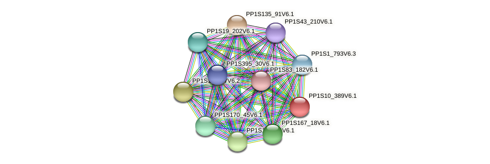 PP1S10_389V6.1 protein (Physcomitrella patens) - STRING interaction network