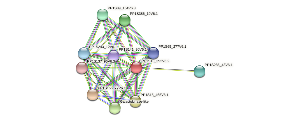 PP1S10_392V6.1 protein (Physcomitrella patens) - STRING interaction network