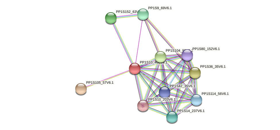 PP1S10_408V6.1 protein (Physcomitrella patens) - STRING interaction network