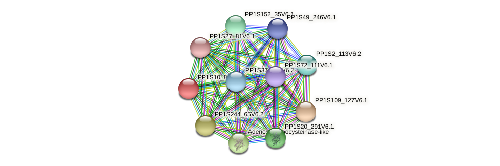 PP1S10_84V6.1 protein (Physcomitrella patens) - STRING interaction network