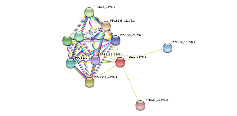 PP1S10_95V6.1 protein (Physcomitrella patens) - STRING interaction network