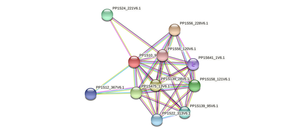 PP1S10_96V6.1 protein (Physcomitrella patens) - STRING interaction network