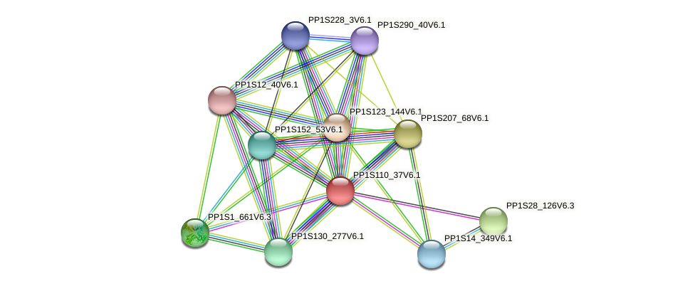 PP1S110_37V6.1 protein (Physcomitrella patens) - STRING interaction network