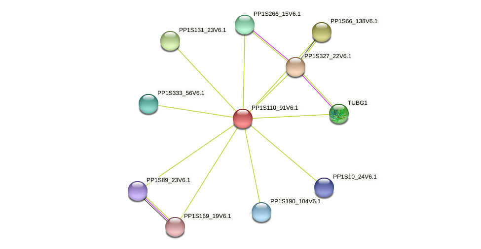PP1S110_91V6.1 protein (Physcomitrella patens) - STRING interaction network