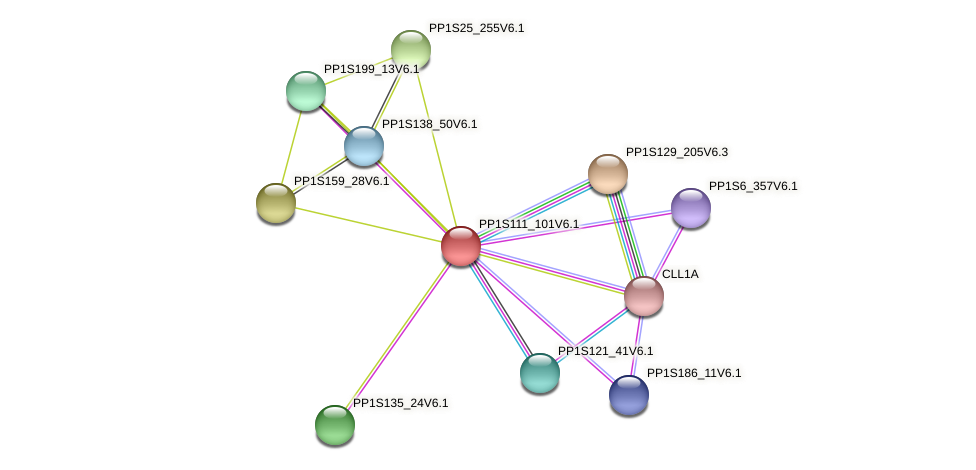 PP1S111_101V6.1 protein (Physcomitrella patens) - STRING interaction network