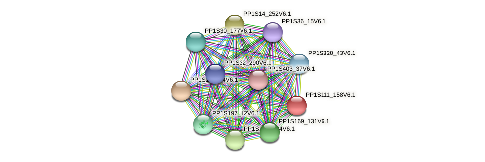 PP1S111_158V6.1 protein (Physcomitrella patens) - STRING interaction network