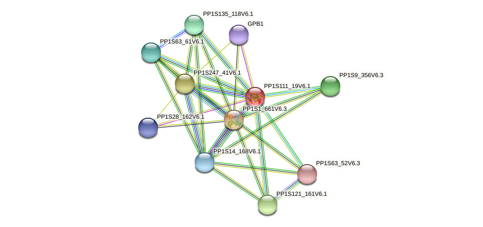 PP1S111_19V6.1 protein (Physcomitrella patens) - STRING interaction network
