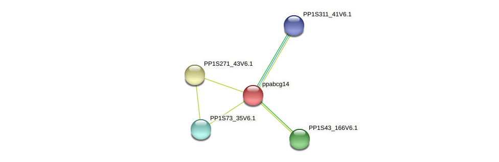 ppabcg14 protein (Physcomitrella patens) - STRING interaction network