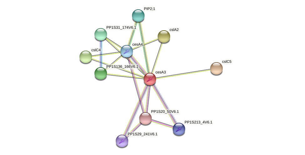 cesA3 protein (Physcomitrella patens) - STRING interaction network