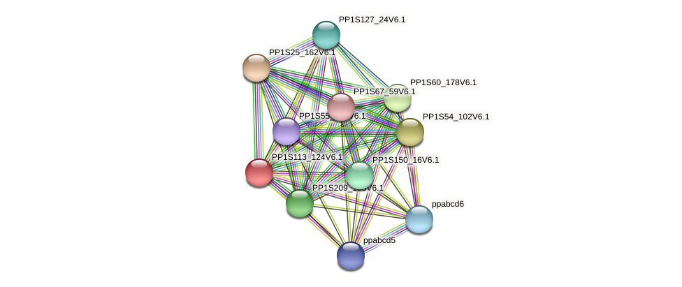 PP1S113_124V6.1 protein (Physcomitrella patens) - STRING interaction network