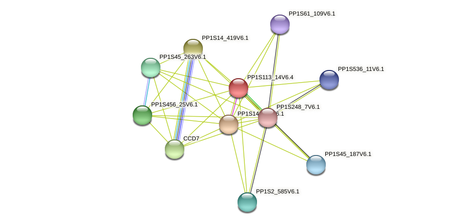 PP1S113_14V6.1 protein (Physcomitrella patens) - STRING interaction network