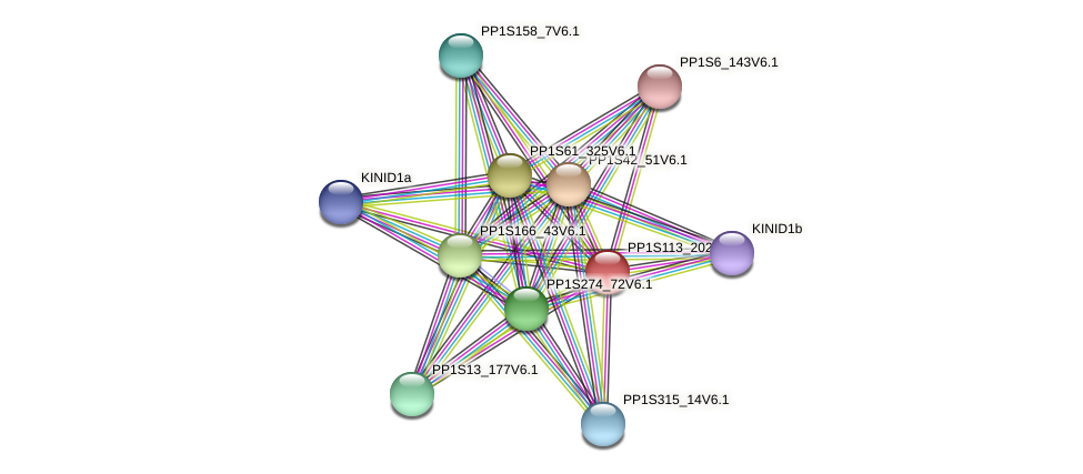 PP1S113_202V6.1 protein (Physcomitrella patens) - STRING interaction network
