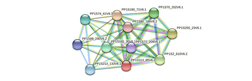 PP1S113_85V6.1 protein (Physcomitrella patens) - STRING interaction network
