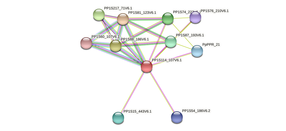 PP1S114_107V6.1 protein (Physcomitrella patens) - STRING interaction network
