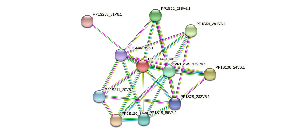 PP1S114_10V6.1 protein (Physcomitrella patens) - STRING interaction network