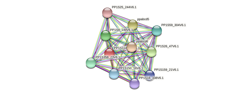 PP1S114_119V6.1 protein (Physcomitrella patens) - STRING interaction network