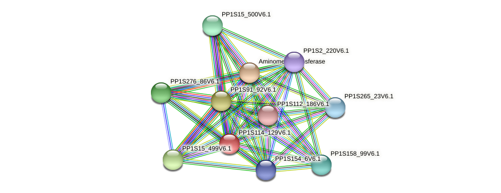 PP1S114_129V6.1 protein (Physcomitrella patens) - STRING interaction network