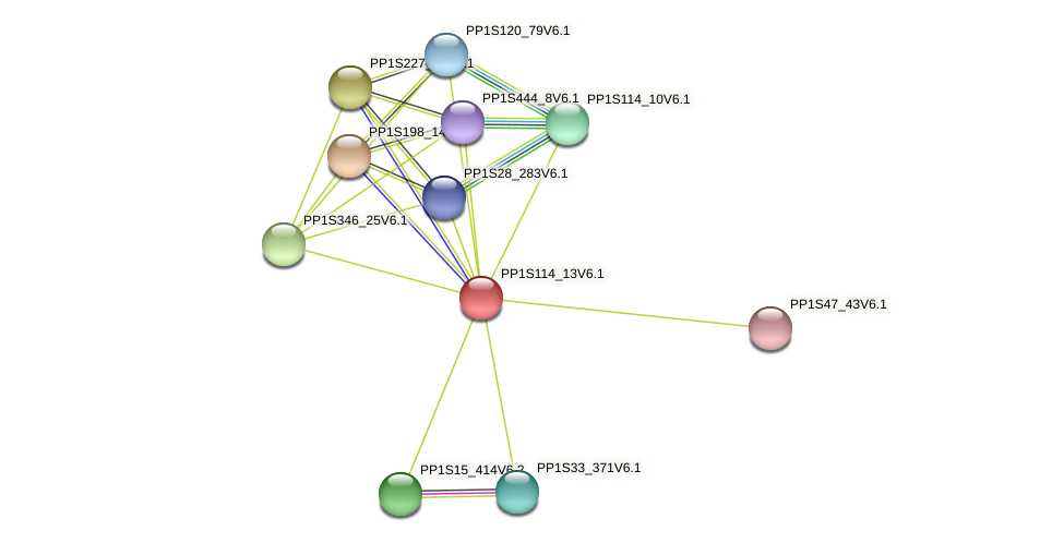 PP1S114_13V6.1 protein (Physcomitrella patens) - STRING interaction network