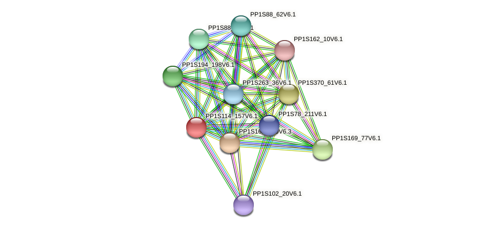 PP1S114_157V6.1 protein (Physcomitrella patens) - STRING interaction network
