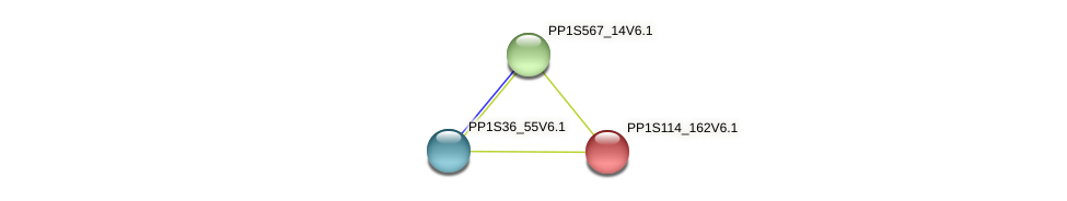 PP1S114_162V6.1 protein (Physcomitrella patens) - STRING interaction network