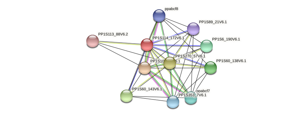 PP1S114_172V6.1 protein (Physcomitrella patens) - STRING interaction network