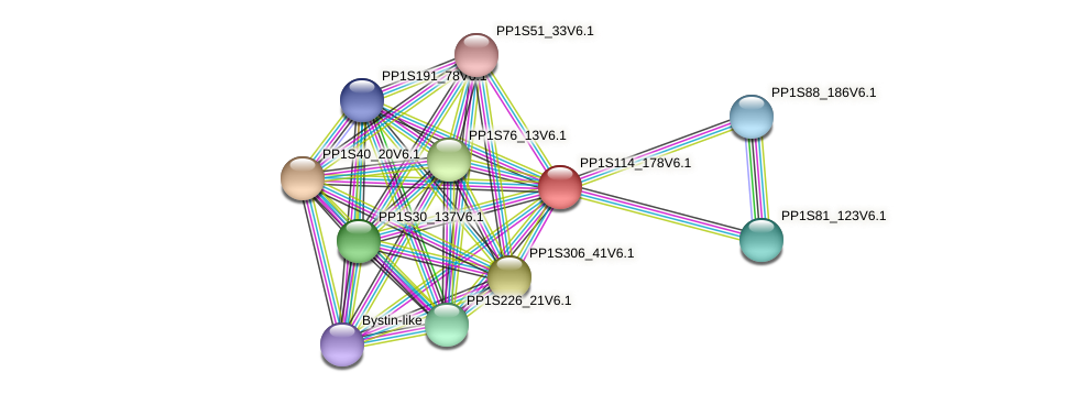 PP1S114_178V6.1 protein (Physcomitrella patens) - STRING interaction network