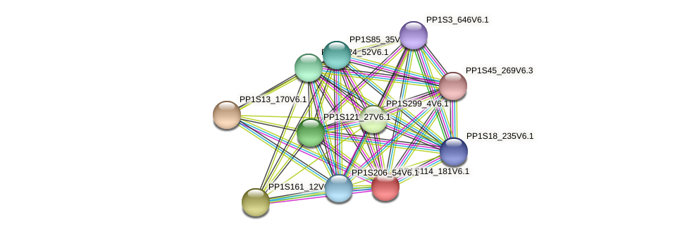PP1S114_181V6.1 protein (Physcomitrella patens) - STRING interaction network