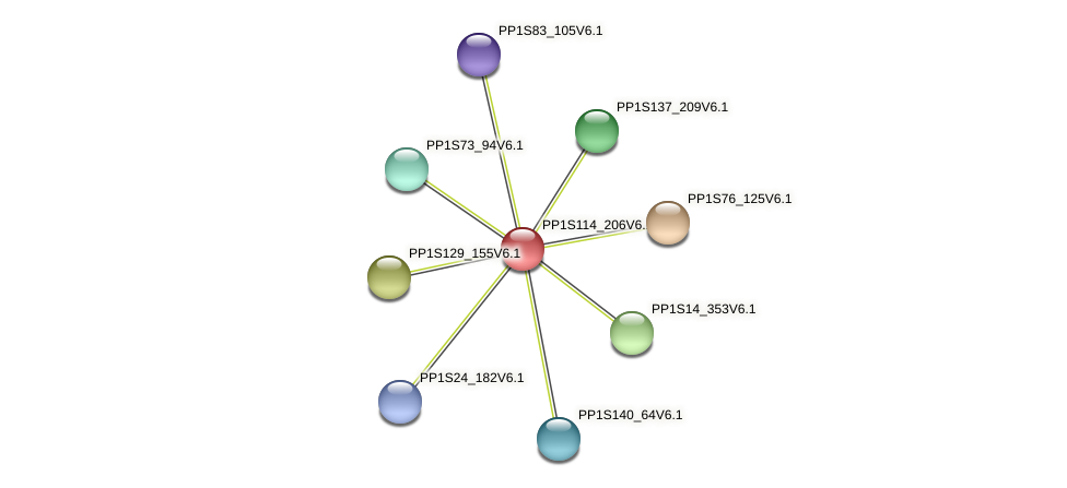 PP1S114_206V6.1 protein (Physcomitrella patens) - STRING interaction network