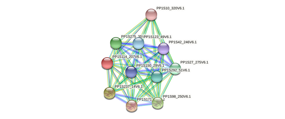 PP1S114_207V6.1 protein (Physcomitrella patens) - STRING interaction network