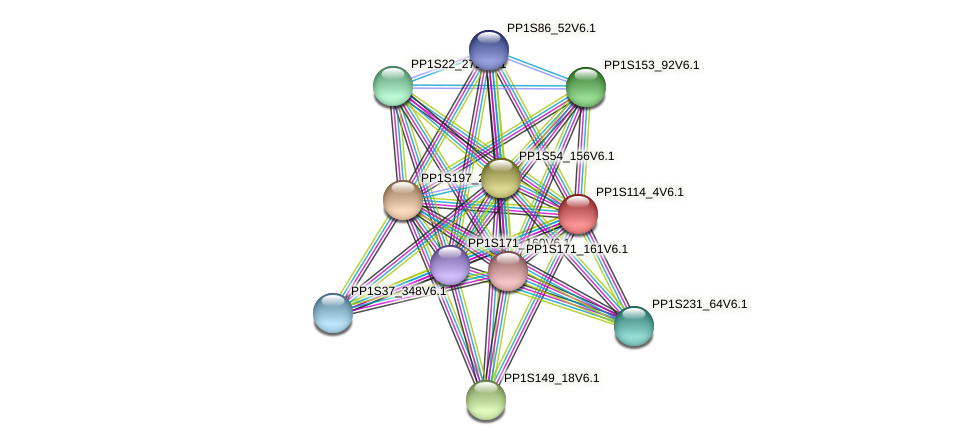 PP1S114_4V6.1 protein (Physcomitrella patens) - STRING interaction network