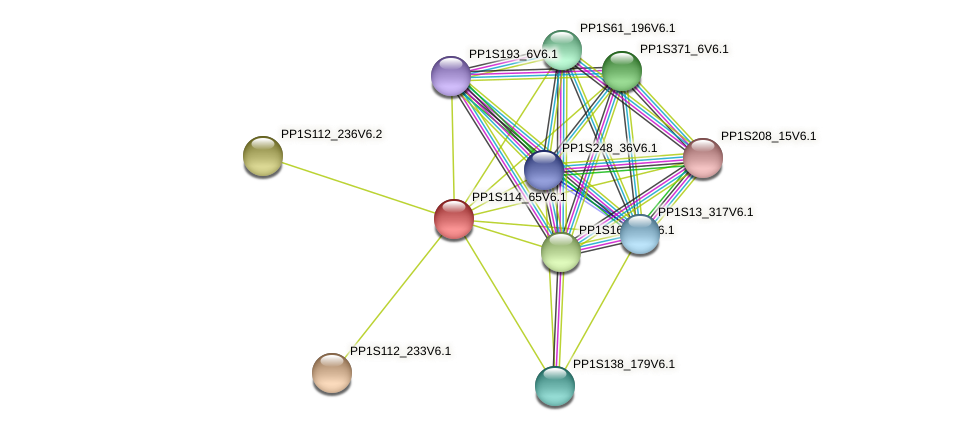 PP1S114_65V6.1 protein (Physcomitrella patens) - STRING interaction network