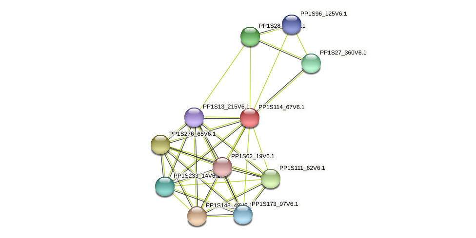PP1S114_67V6.1 protein (Physcomitrella patens) - STRING interaction network