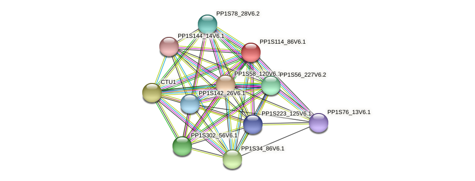PP1S114_86V6.1 protein (Physcomitrella patens) - STRING interaction network