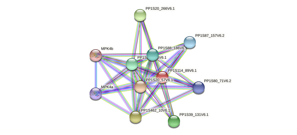 PP1S114_89V6.1 protein (Physcomitrella patens) - STRING interaction network