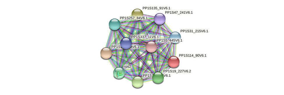 PP1S114_90V6.1 protein (Physcomitrella patens) - STRING interaction network
