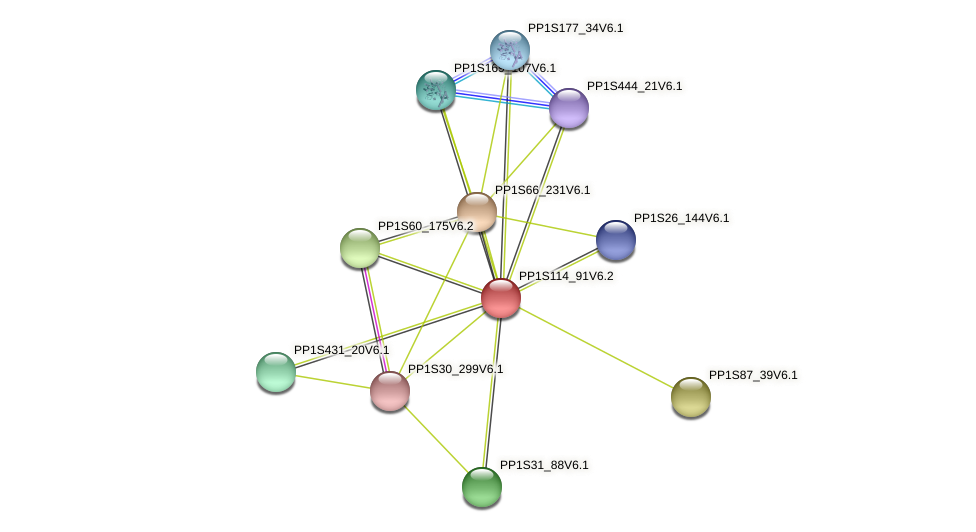 PP1S114_91V6.1 protein (Physcomitrella patens) - STRING interaction network