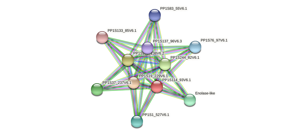 PP1S114_93V6.1 protein (Physcomitrella patens) - STRING interaction network