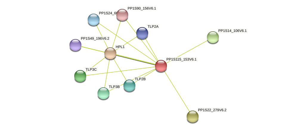 PP1S115_153V6.1 protein (Physcomitrella patens) - STRING interaction network