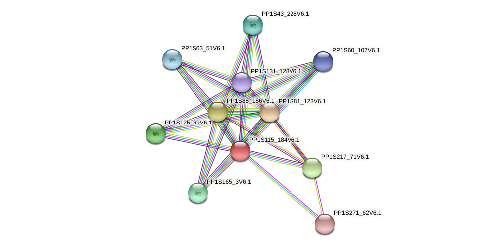 PP1S115_184V6.1 protein (Physcomitrella patens) - STRING interaction network