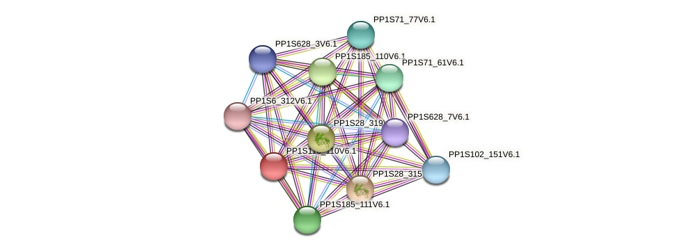 PP1S116_110V6.1 protein (Physcomitrella patens) - STRING interaction network