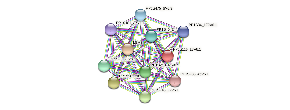 PP1S116_13V6.1 protein (Physcomitrella patens) - STRING interaction network