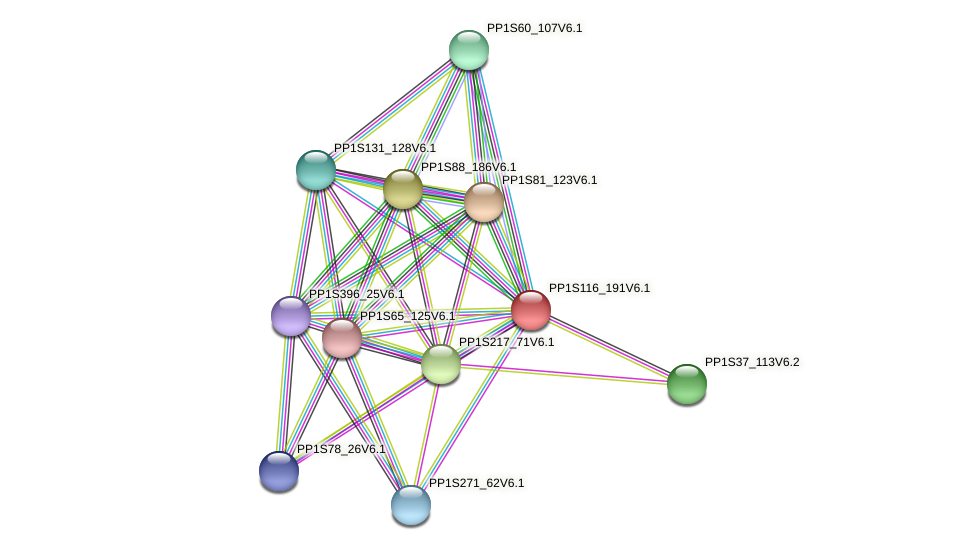 PP1S116_191V6.1 protein (Physcomitrella patens) - STRING interaction network