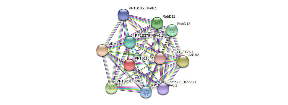 PP1S116_43V6.1 protein (Physcomitrella patens) - STRING interaction network